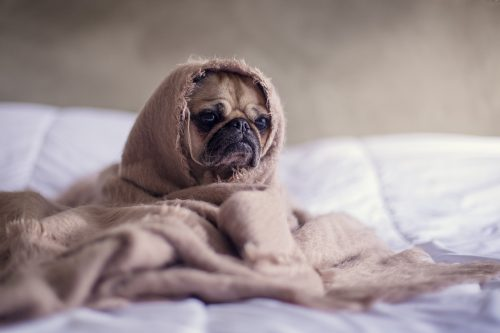 INFORMAȚII UTILE pentru iubitorii de animale! Medicul veterinar te ÎNVAȚĂ să-ți îngrijești câinele corect
