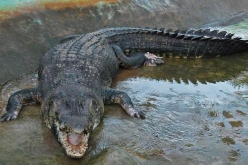 Cum credeti ca doarme un crocodil, daca stie ca prin preajma lui sunt oameni?