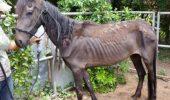 Doar muschi! Fara creier sau suflet! Doi culturisti americani si-au maltratat caii si nu vad nici o problema in asta!