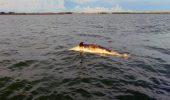 Decese neobisnuite: delfini, lei de mare si testoase marine – gasite moarte pe o insula mexicana