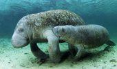 Tu stii ceva despre acest mamifer? Afla ca, mai exista doar trei colonii in toata lumea!
