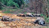 Imagine socanta! Contrabandistii au otravit cu cianura inca 22 de elefanti, in Zimbabwe!