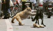 Imagini care te vor IMPRESIONA! Despre afectiunea mamelor din lumea animalelor!