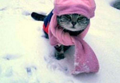 A venit frigul! Cum ingrijesc pisica pe timpul iernii?