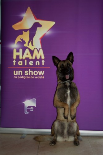 """Mai sunt cateva zile pana la debutul """"Ham Talent"""""""