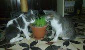 Cine tine matele la distanta? Ce plante urasc pisicile?