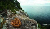 Nicicum o destinatie de vacanta: Insula unde serpii sunt de cinci ori mai veninosi decat cei de pe continent!