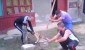 Derbedeilor care s-au filmat in timp ce taiau coada unui caine li s-au intocmit dosare penale