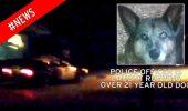 Un alt politist socheaza cu atitudinea sa fata de un caine! A trecut de trei ori cu masina peste animal, apoi l-a impuscat!