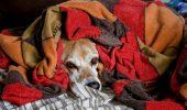 Cum pregatim animalutele pentru iarna?
