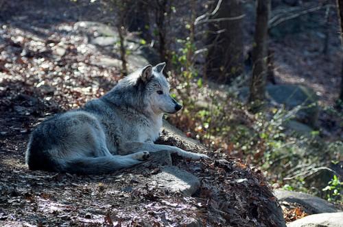 sursa foto: http://lobomarley.org