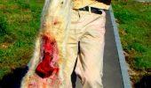 Atrocitatile la care au supus animalele sunt greu de imaginat! Sefii unui adapost pentru caini din Bihor au fost, in sfarsit, condamnati! Inchisoare e prea putin pentru ce au facut!