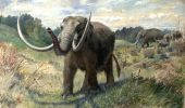 Studiu despre relatia dintre un sol fertil si disparitia marilor mamifere!
