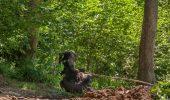 O sansa la viata buna pentru ursii din Sanctuarul de la Zarnesti!