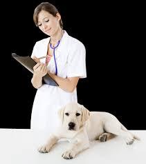 Cinci analize medicale ESENȚIALE pe care trebuie să le faci câinelui tău, când ajunge la bătrânețe