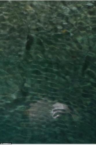 monstru marin corfu 2