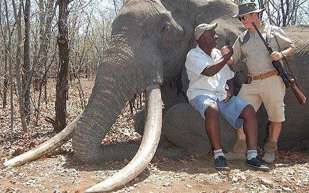 elefant ucis zimbabwe