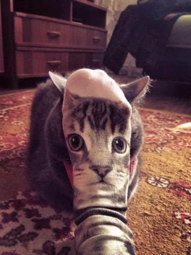 Amuzant: Pisici surprinse in momentul cel mai potrivit!