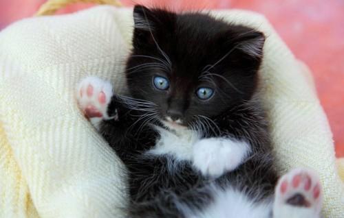 Primii pasi ce trebuie facuti cand ne luam o pisicuta?