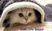 Cum tratam frica pisicilor fata de locuri si obiecte?
