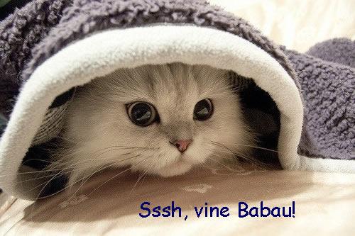 pisica fricoasa
