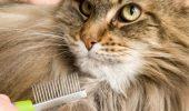 Sfaturi care te ajuta atunci cand pisica naparleste!