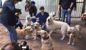 Recunostinta unor Goldeni fata de veterinarul lor!