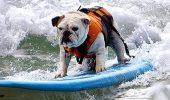 RIP! Tillman, cainele celebru care facea skateboard si surfing, a murit