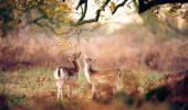 Animalute surprinse de magia toamnei! O colectie impresionanta de fotografii!
