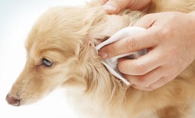 urechi curatare
