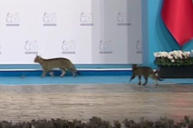 Cats-at-G20