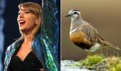 De ce a parasit, in graba, Taylor Swift, Noua Zeelanda?