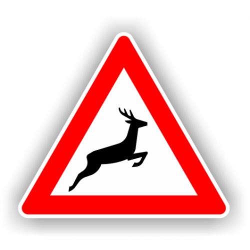 In Romania nu exista statistici care sa ne arate cate animale mor in accidente de masina sau de tren. Se vor crea coridoare ecologice pentru habitate si specii!