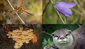 biodiversitate
