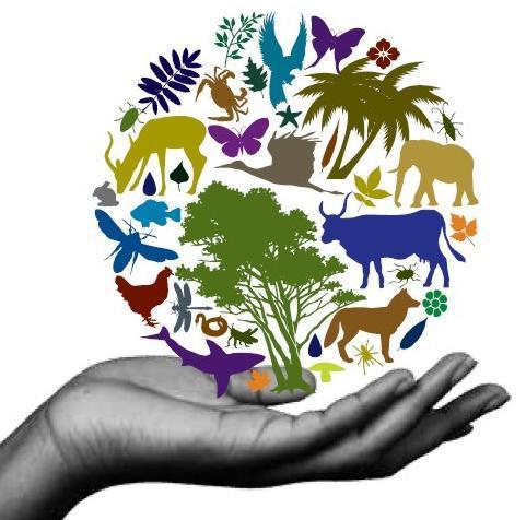Comisia Europeana: Pierderea biodiversitatii ar costa UE doua-trei miliarde de euro/anual
