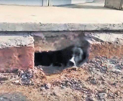 Un video INGROZITOR! O catelusa a fost zidita impreuna cu puii ei, in subsolul unui bloc!