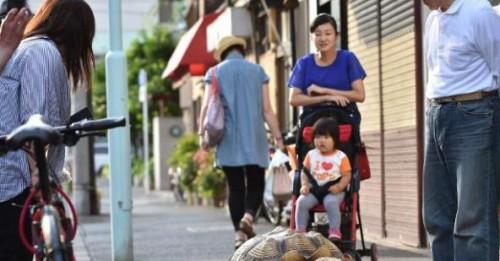 Ce a ales ca animal de companie un japonez?