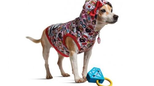 Vezi ce vedeta internationala a lansat, de curand, o colectie vestimentara pentru animalele de companie