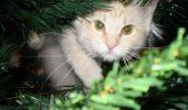 Se apropie sarbatorile! Cum iti protejezi bradul de Craciun de pisicuta cea nazdravana?