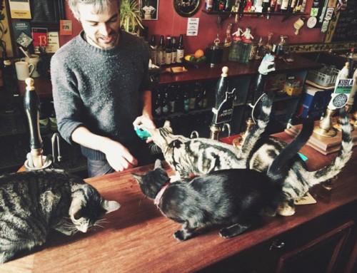 cat pub2