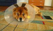 Revoluție în lumea veterinară