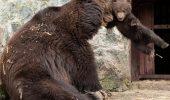 ARTĂ. Fotografii DE EXCEPȚIE care surprind SPECTACOLUL uimitor oferit de ANIMALE