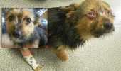 BESTIILE trebuie sa plateasca! Un Chihuahua a fost furat de la proprietari, drogat, torturat si incendiat! Faptasii au primit sentinte prea blande! Petitie pentru sanctiuni adevarate!