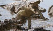 Alerta in Australia: Pericol de crocodili din cauza inundatiilor