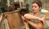 Vrei o veverita siberiana ca animal de companie? Gasesti la ferma din Brasov!