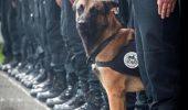 Stapanul cainelui-erou mort in asaltul de la Saint-Denis povesteste despre disparitia lui Diesel