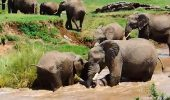 Sa vedeti IUBIRE! Mamica elefant nu si-a abandonat puiul luat de ape!
