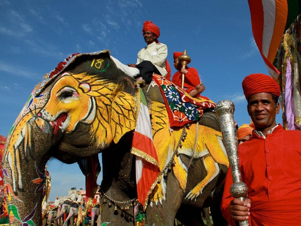 elefanti india