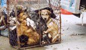 S-A DECIS: Liber la eutanasierea cainilor nerevendicati in 14 zile! INCEPE MACELUL!