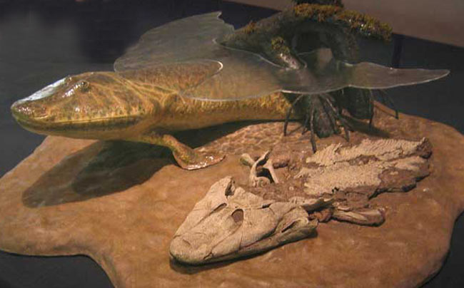 fosile Tiktaalik roseae